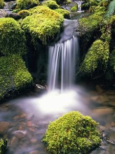 Mossy Rocks and Creek Waterfall by Craig Tuttle