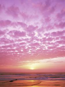 Pink Sunset Over Heceta Beach by Craig Tuttle