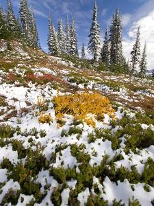Snowy Hill at Mount Rainier National Park by Craig Tuttle