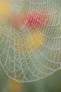 Spider Web Bathed in Drops of Dew by Craig Tuttle