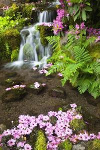 Spring Flowers Add Beauty to Waterfall at Crystal Springs Garden, Portland Oregon. Pacific Northwes by Craig Tuttle