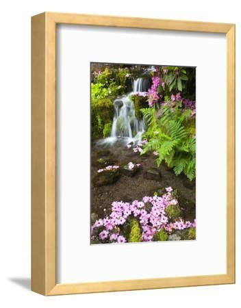 Spring Flowers Add Beauty to Waterfall at Crystal Springs Garden, Portland Oregon. Pacific Northwes