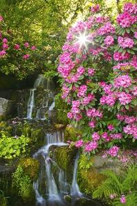 Spring Flowers in Crystal Springs Rhododendron Garden, Portland, Oregon by Craig Tuttle