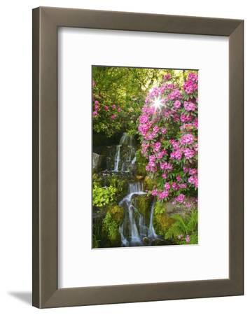 Spring Flowers in Crystal Springs Rhododendron Garden, Portland, Oregon