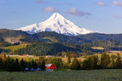 Sunrise Apple Blossoms and Mt.Hood, Hood River, Oregon, Columbia River Gorge, Pacific Northwest by Craig Tuttle