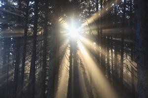 Sunrise through Morning Fog and Trees, Oregon Coast, Pacific Northwest by Craig Tuttle