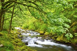 Tanner Creek, Columbia River Gorge National Scenic Area, Oregon, Pacific Northwest by Craig Tuttle