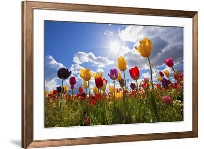 Tulip Fields, Wooden Shoe Tulip Farm, Woodburn Oregon, United States by Craig Tuttle