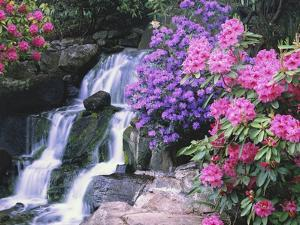 Waterfall in Crystal Springs Garden by Craig Tuttle