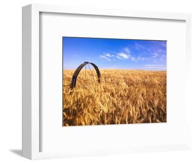 Wheat Crop Growing in Field