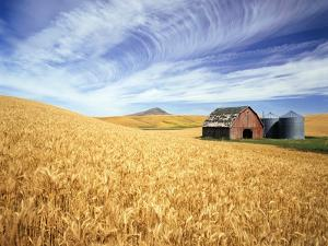 Wheat Field Surrounding Barn by Craig Tuttle