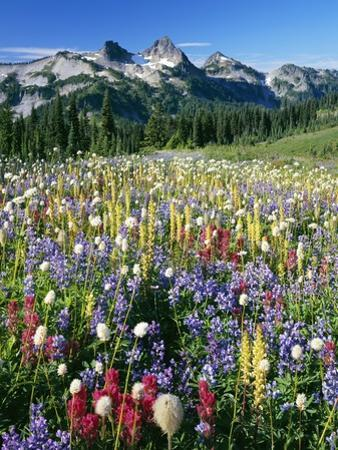 Wildflower Meadow and Tatoosh Range by Craig Tuttle