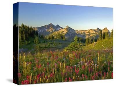 Wildflowers and Tatoosh Range