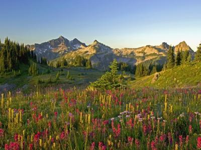 Wildflowers and Tatoosh Range by Craig Tuttle