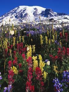 Wildflowers Blooming in Meadow by Craig Tuttle