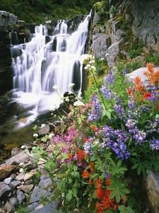 Wildflowers in Bloom by Waterfall by Craig Tuttle