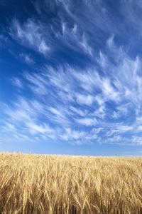 Wispy Clouds Swirling over Wheat Field by Craig Tuttle