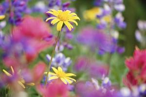 Yellow Daisies Among Flowers by Craig Tuttle