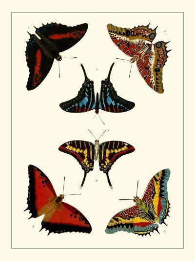 Cramer Butterflies II-Pieter Cramer-Art Print