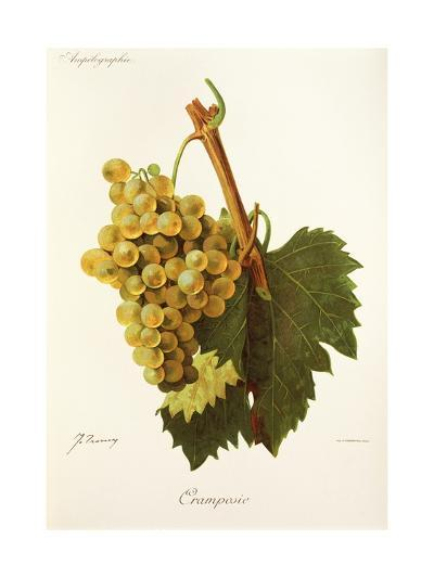 Cramposie Grape-J. Troncy-Giclee Print