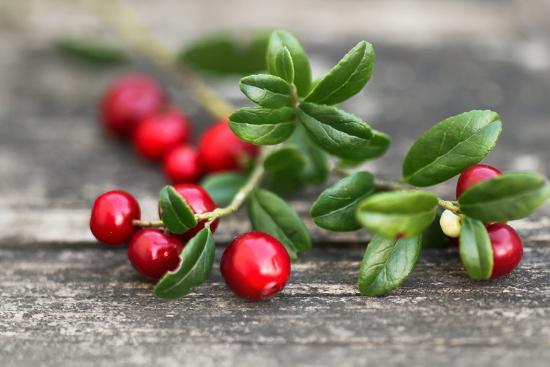 Cranberry-Ana Lukascuk-Photographic Print