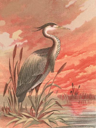 Crane In Marsh At Sunset-Found Image Press-Art Print