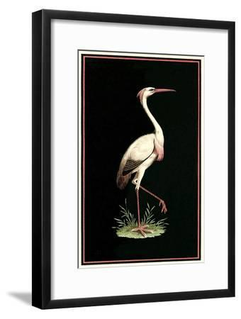Crane on Black Background