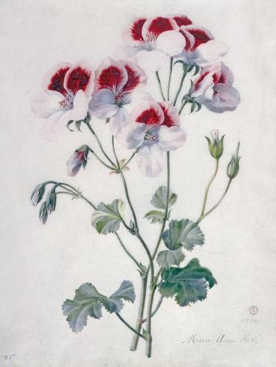 Crane's Bill- Marie-Anne-Giclee Print