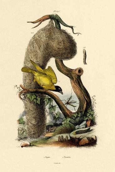 Cranefly, 1833-39--Giclee Print
