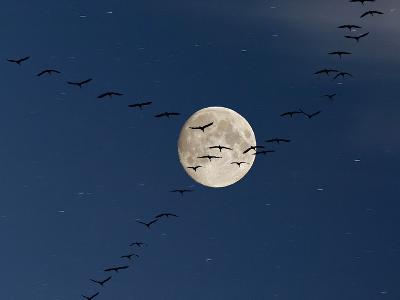 Cranes Flying to Moon-Sebastian Schneider-Photographic Print