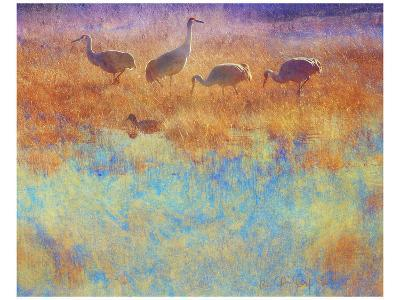 Cranes in Soft Mist-Chris Vest-Art Print