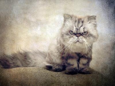 Cranky Cat-Jessica Jenney-Photographic Print
