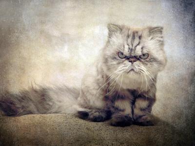 https://imgc.artprintimages.com/img/print/cranky-cat_u-l-q10phlh0.jpg?p=0