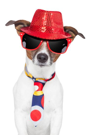 Crazy Silly Funny Dog Hat Glasses Tie-Javier Brosch-Photographic Print