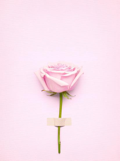 Creative Valentines Day Still Life Concept, Pink Rose in Greeting Card on Pink Paper- Fisher Photostudio-Photographic Print