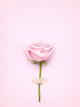 https://imgc.artprintimages.com/img/print/creative-valentines-day-still-life-concept-pink-rose-in-greeting-card-on-pink-paper_u-l-q13f5x20.jpg?p=0