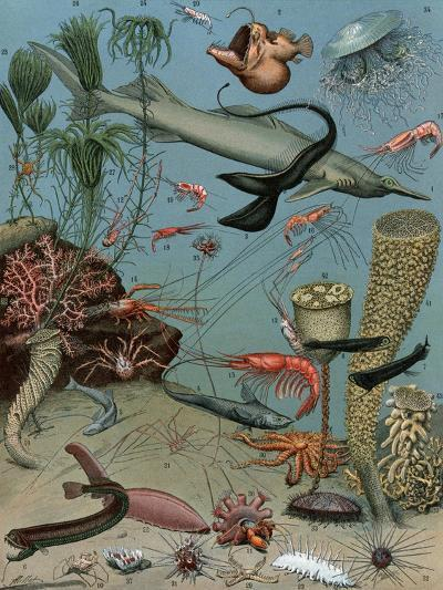 Creatures of the Sea Floor, Including Fish, Starfish, Sea Urchins, Crustaceans, Polyps--Giclee Print