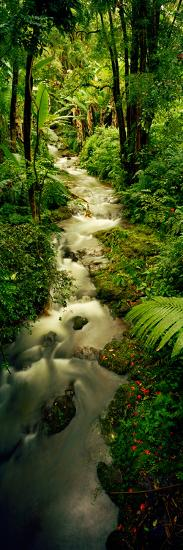 Creek Flowing Through a Rainforest, North of Hilo, Big Island, Hawaii, Usa--Photographic Print