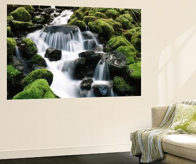 Creek Near Sol Duc Falls, Olympic National Park, Washington State, USA-Stuart Westmorland-Giant Art Print