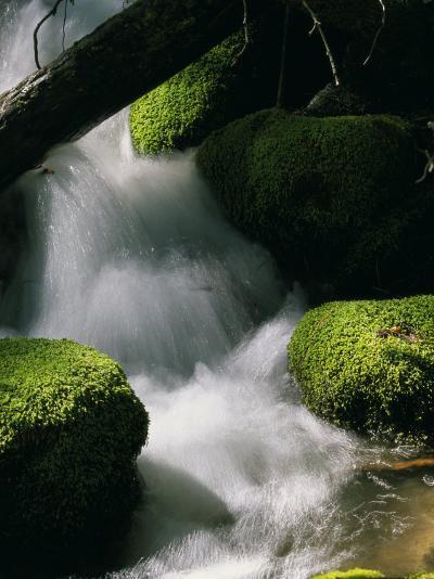 Creek Rushing Over Moss-Covered Stones-Marc Moritsch-Photographic Print