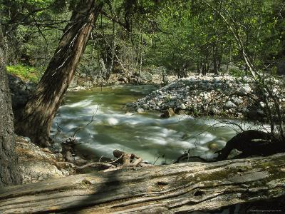 Creek Rushing Past Rocky Banks in a Forested Setting--Photographic Print