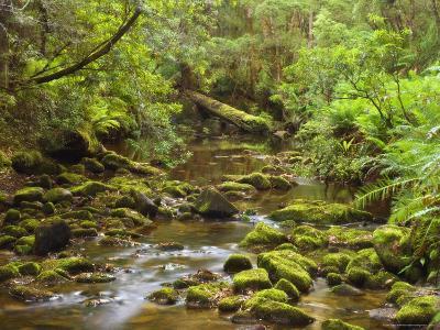 Creekton Rivulet, Southern Forests, Tasmania, Australia, Pacific-Jochen Schlenker-Photographic Print
