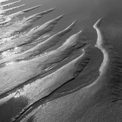 Creepers Designs and Pebble on Sand, Porbandar--Photographic Print