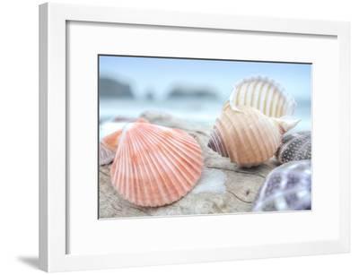 Crescent Beach Shells 10-Alan Blaustein-Framed Photographic Print