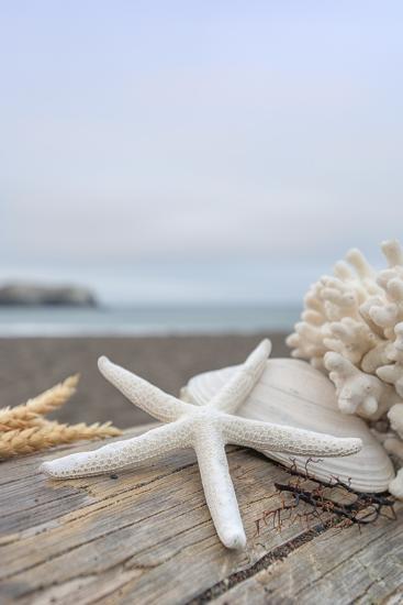 Crescent Beach Shells 14-Alan Blaustein-Photographic Print