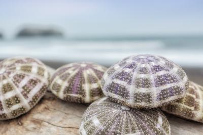 Crescent Beach Shells 8-Alan Blaustein-Photographic Print