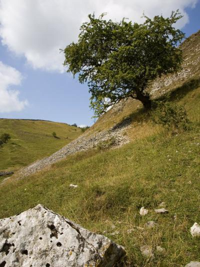 Cressbrook Dale, White Peak, Peak District National Park, Derbyshire, England, United Kingdom-White Gary-Photographic Print