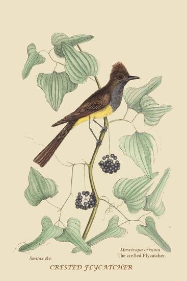 Crested Fkycatcher-Mark Catesby-Art Print