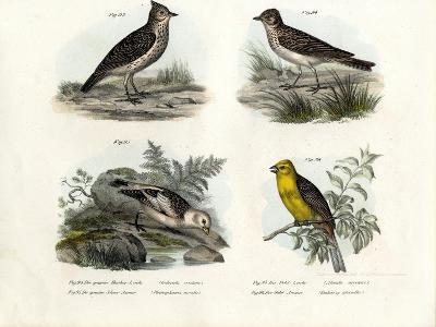 Crested Lark, 1864--Giclee Print