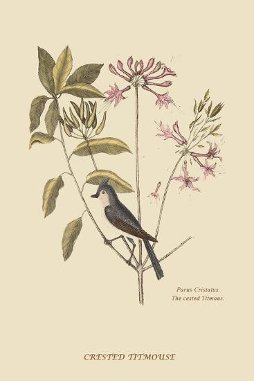 Crested Titmous-Mark Catesby-Art Print